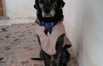 Marina di Gioiosa Jonica (RC):un atto di barbarie consumato verso un cane indifeso
